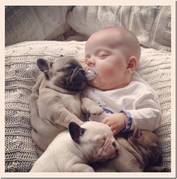 baby-bulldog-puppies-9