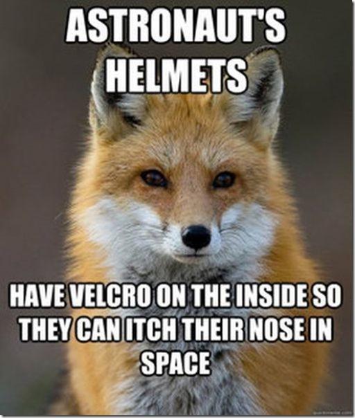 fox-facts-meme-30