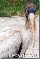 2011-12-15 Everglades Fl 060