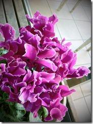 flor-tumblr-facebook-42