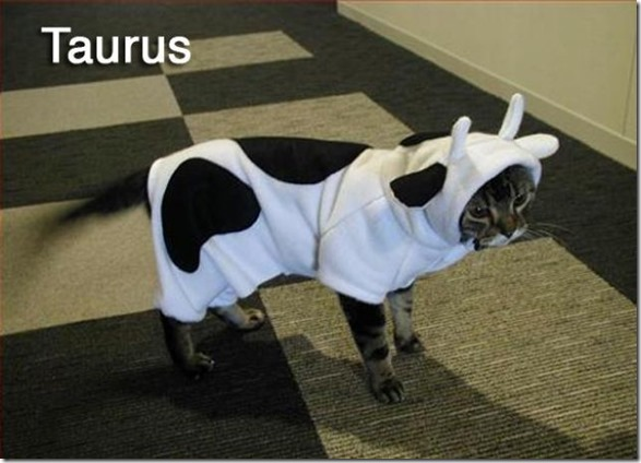 cats-signs-zodiac-1