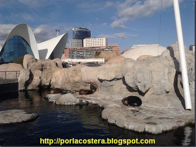4 oceanografico ciutat de les arts i les ciencies 00047