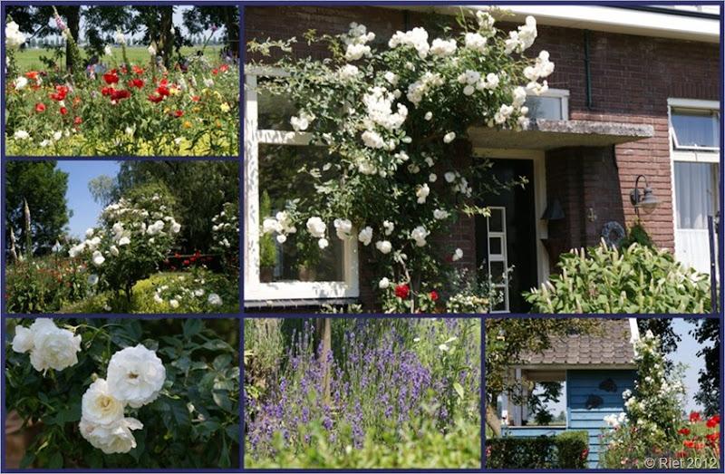 2010-06-27 theetuin de winde2