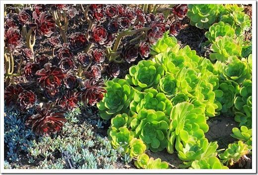 130927_SucculentGardens_130_thumb