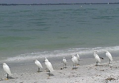 Heron on beach at Sanibel.2013