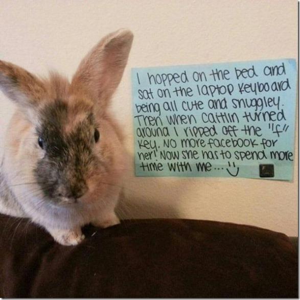 bunny-rabbit-shaming-8