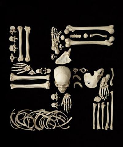 Francois-Robert-Bones-art-13