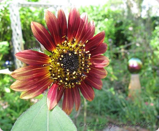 06-16-sunflower3