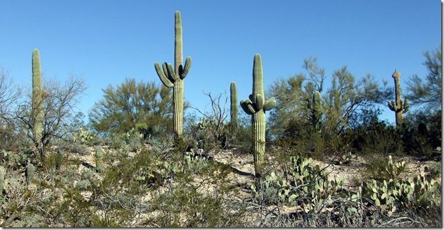 Saguaro hill 2-25-2013 9-32-05 AM 3216x1664