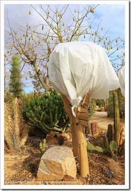 141231_Tucson_Bachs_0044