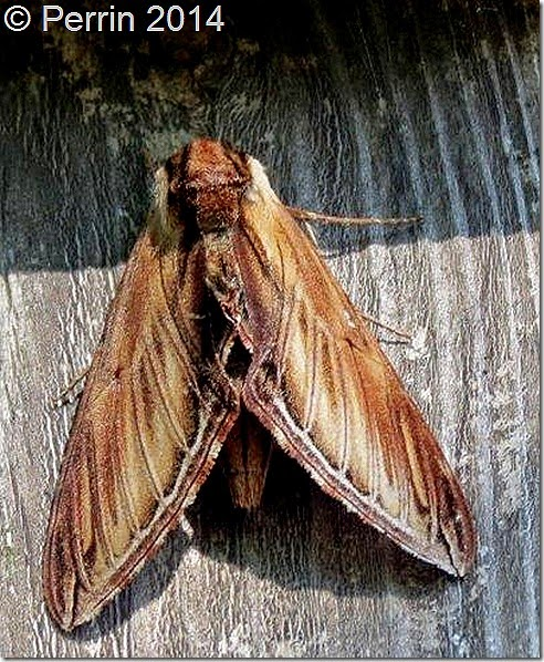 Moth on Board
