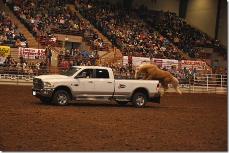 rodeo 022213 (31)