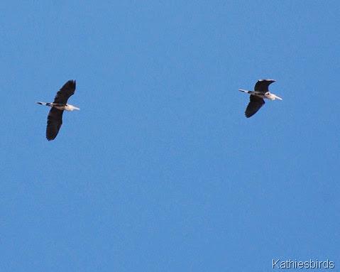 6. herons-kab