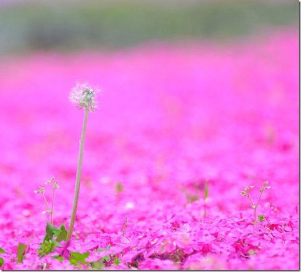 pink-park-japan-2