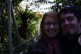 North Island - Wellington - Te Papa Museum (rainforest exhibit)