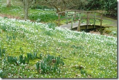kailzie snowdrops and bridge