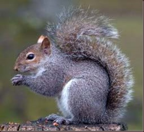 Amazing Animals Pictures Squirell (2)