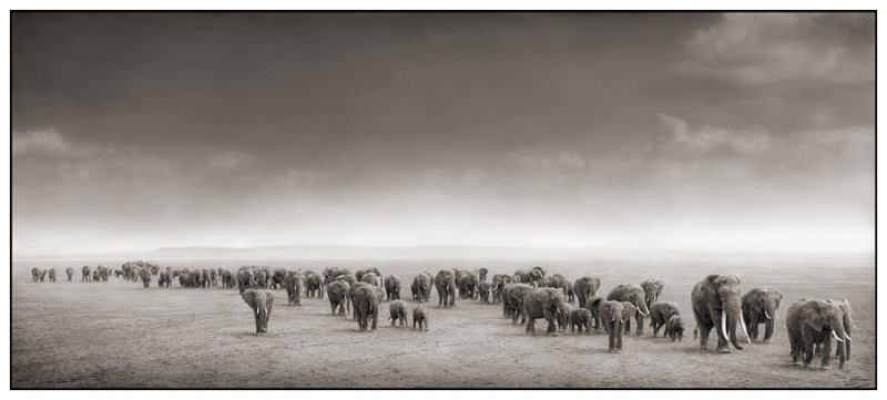 Elephant_Exodus