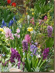 garden colours 008