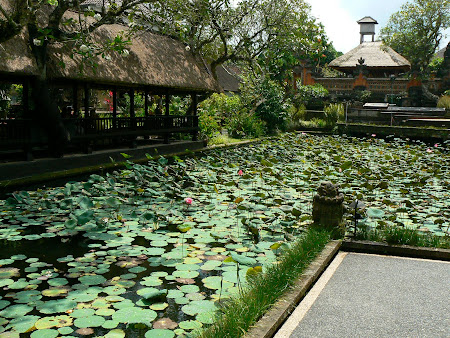 Bali picture: A pond with lilies