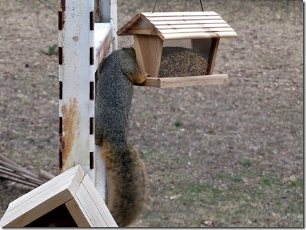 squirrel03-19-14b