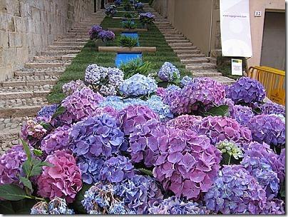 temps de flors (2)