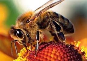Amazing Pictures of Animals, Photo, Nature, Incredibel, Funny, Zoo, Bee, Insetcs, Anthophila, Alex (18)