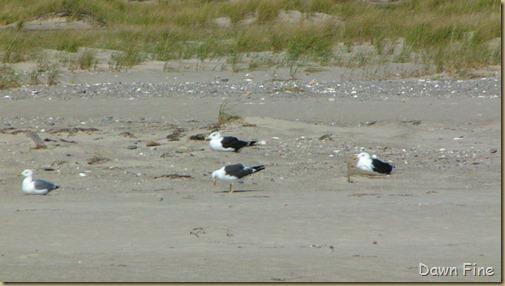 Birding south beach_060
