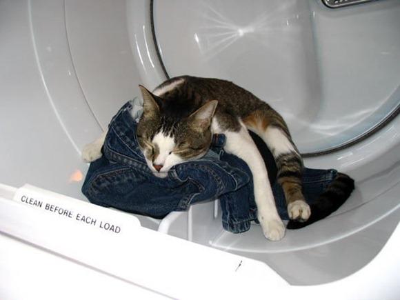 Cats Will Sleep Anywhere 16