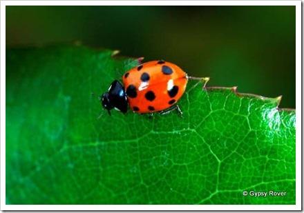 ladybird-001