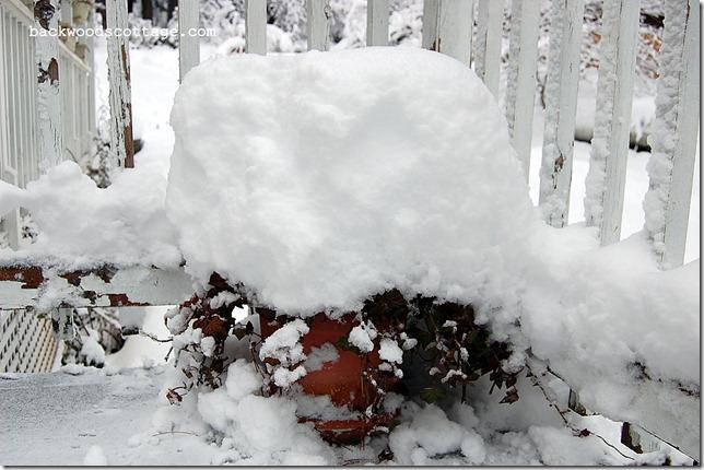 snowySunday8