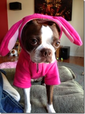 Stella Bunny2