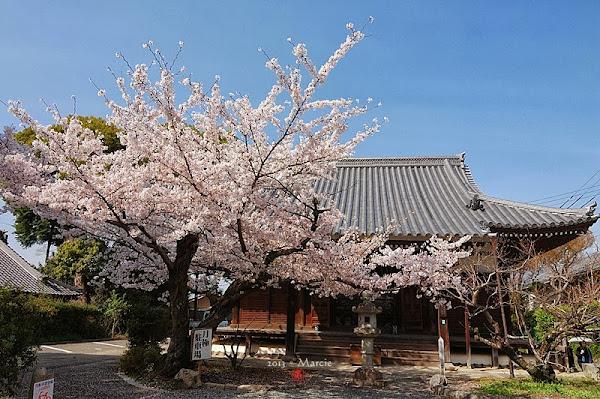 京都真如堂