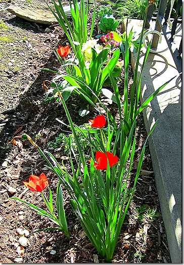 Frontporch_Springblooms