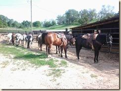 Hack Horses