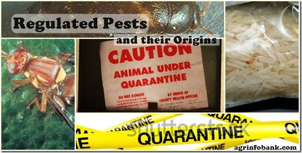 Regulated Pests and their Origins