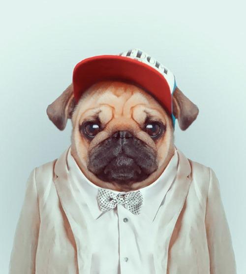 animais roupas humanas - cão