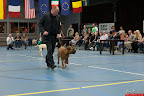 20130510-Bullmastiff-Worldcup-1061.jpg