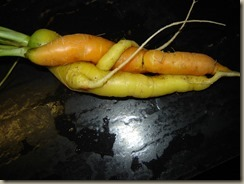 carrotlovers3