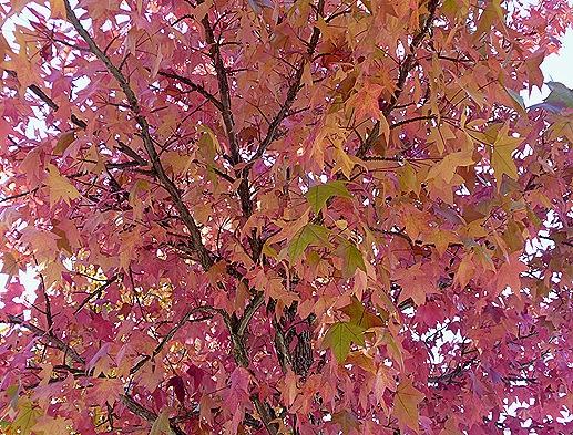 Gloria Ishizaka - Outono - folhas. 7