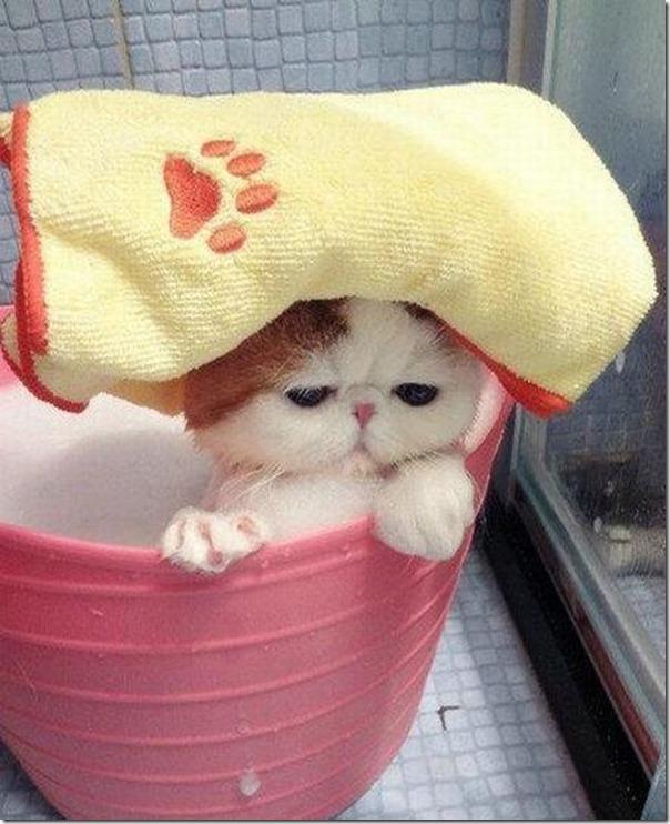 gato tomando banho (5)