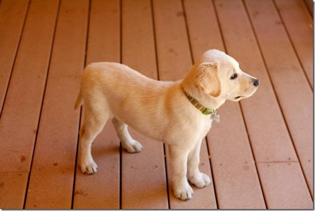 2012 04 21 Duke on the deck