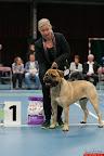 20130511-BMCN-Bullmastiff-Championship-Clubmatch-1894.jpg