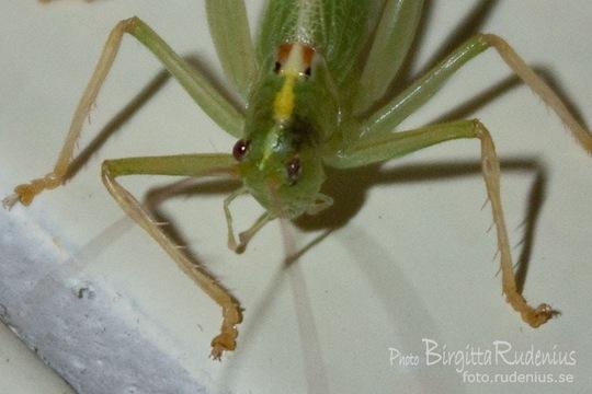 bugs_20110805_grasshopper1a