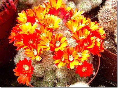Cacti13-blog