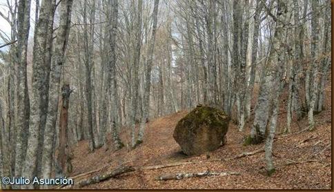 Hayedo de Baigura - Montes de Areta