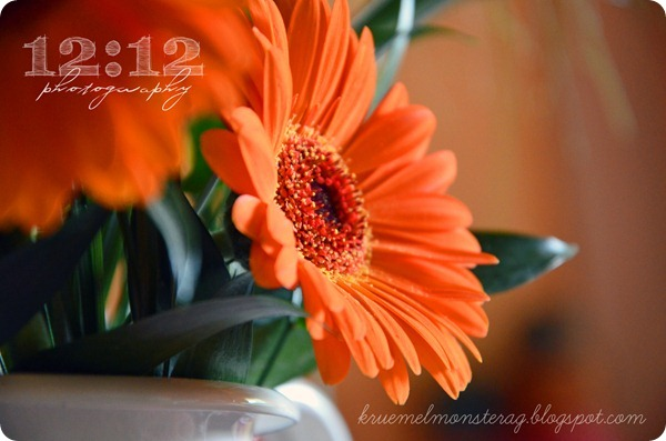 12 12 2012 photochallenge LET IT BLOOM (5)