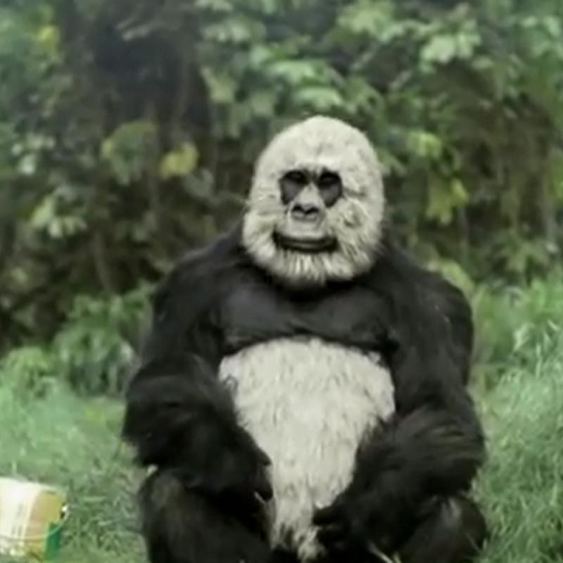 El simio que quería ser panda