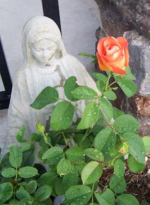 Flowers 1614 (4).JPG