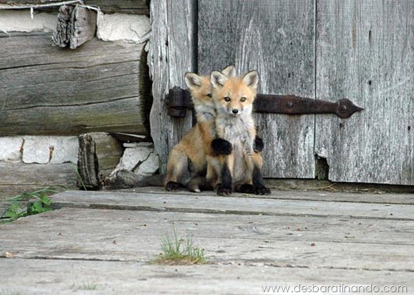 filhotes-de-animais-fotos-cute-cuti-desbaratinando (31)